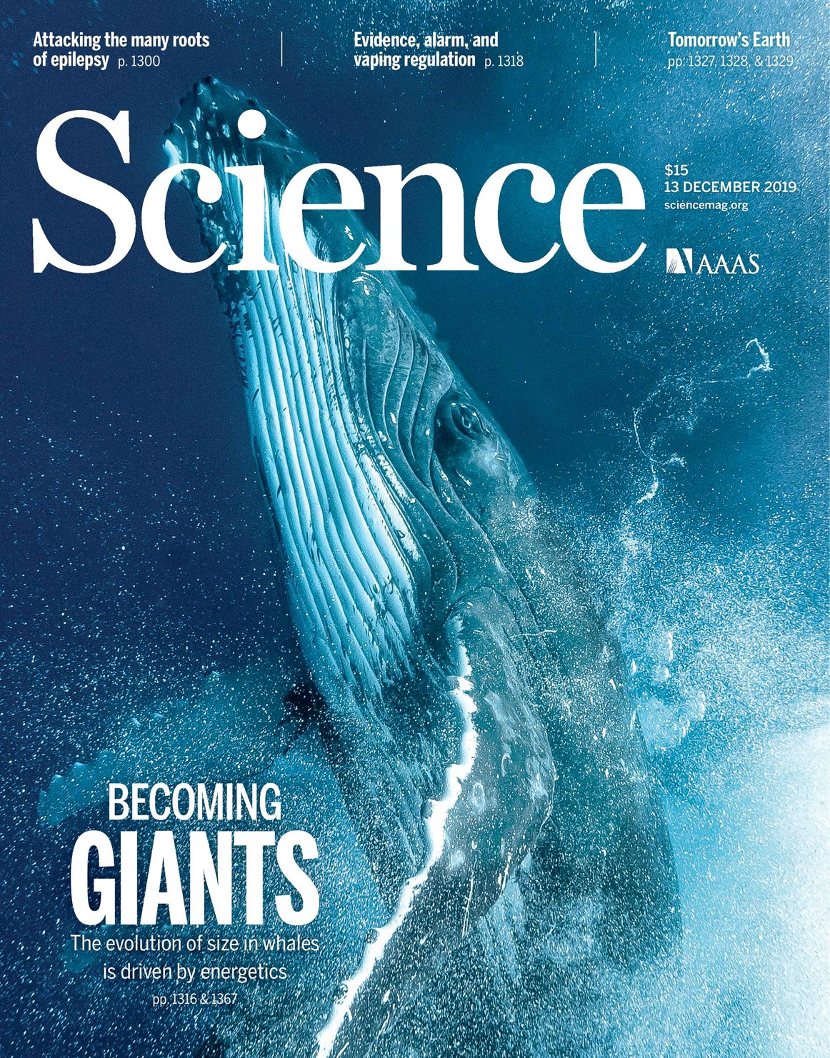 Whale diving. Cover of Science magazine.