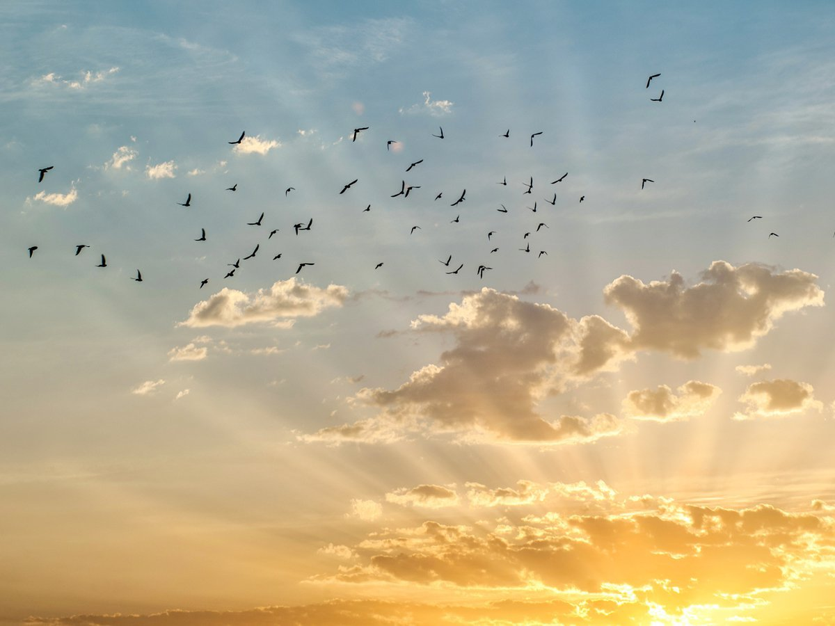 Birds flying with sunset
