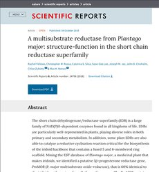 A multisubstrate reductase from Plantago major: structure-function in the short chain reductase superfamily.
