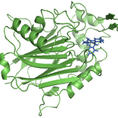 graphic of green ribbon and string representing the crystal structure of an active site