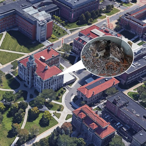 Aerial view of Lyman Hall noting the location of the red-tailed hawk camera.
