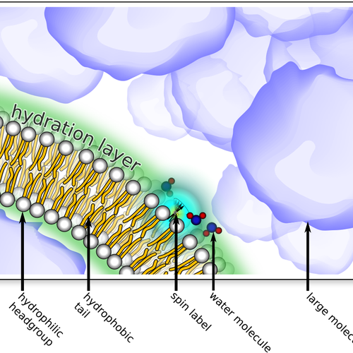 graphic of the lipid layer