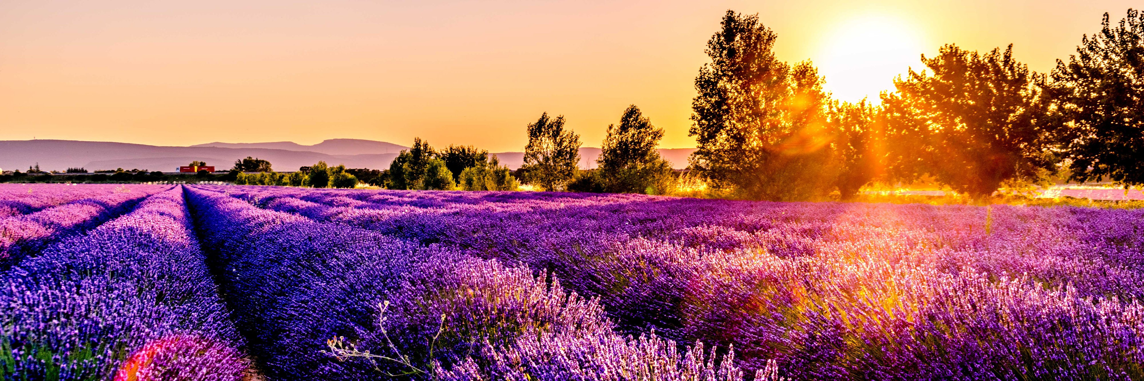 Sunset over a lavender field in Drôme, France